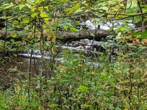 Seven Bridges Natural Area - Rapid River - Kalkaska Countya