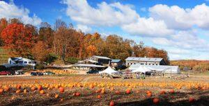 Pond Hill Farm